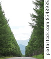 japanese larch, row of tree, summer scenery 8343935