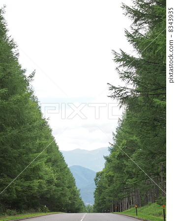 Larch of the summer 2 8343935