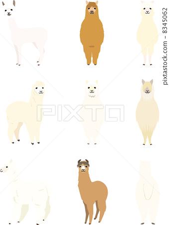 alpaca 8345062