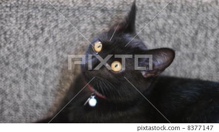 고양이 8377147