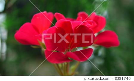 A flower 8381740