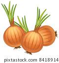 onions 8418914