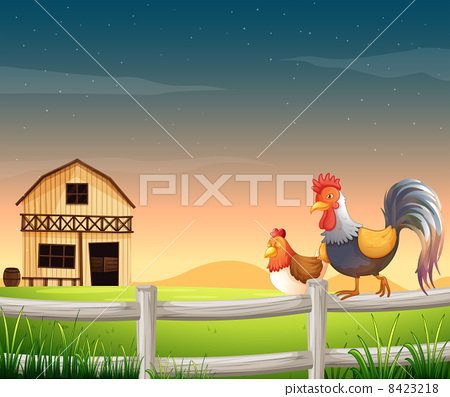 A rooster and a chicken near the barnhouse 8423218