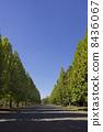 藍天和Plantanus Namiki 8436067