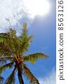 棕櫚樹藍天 8563126