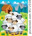 动物 羊羔 年轻 8572558