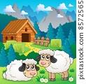 动物 羊羔 年轻 8572565