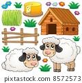 羊羔 年轻 羊 8572573