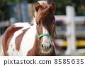 馬 8585635