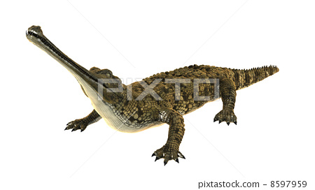 crocodile 8597959