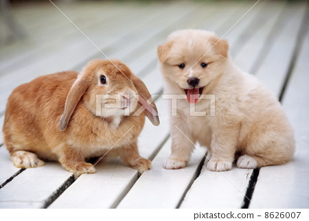 Cute little puppy and rabbit 8626007