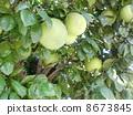 水果 8673845