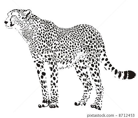 Gepard - Black and white cheetah 8712453