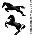 equine, horse, hurtle 8713629