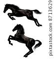 equine, horse, fur 8713629