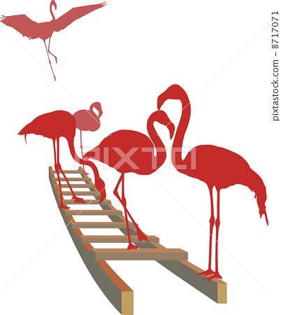 Flamingos on the ladder 8717071