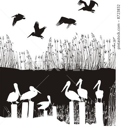 Flock of pelicans 8723832