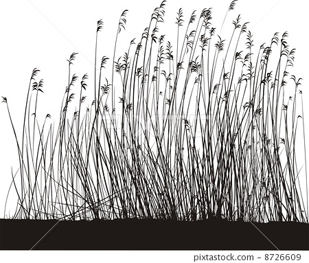Reed 8726609