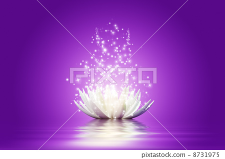 Lotus flower 8731975