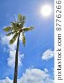 棕櫚樹藍天 8776266