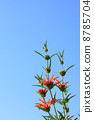 reonochisu, bloom, blossom 8785704