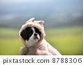 dog, dogs, ear 8788306