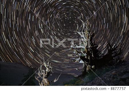 별의 궤적과 세계 최고령 소나무 8877757