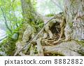 根 树 树木 8882882