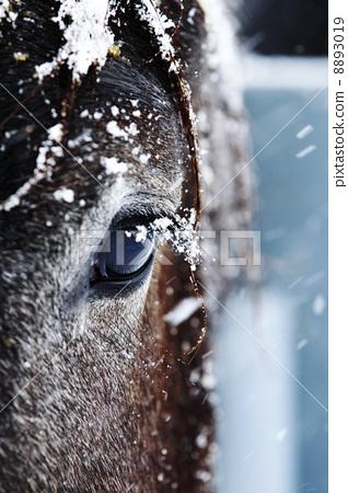 Horse's eyes 8893019