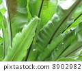 large spiny tree fern 8902982