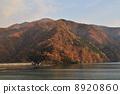 Okutama湖秋葉 8920860