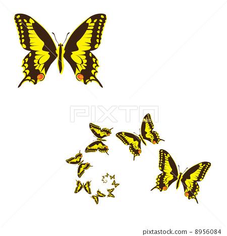 yellow butterflies 8956084