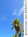棕櫚樹藍天 8980917