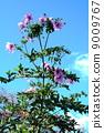 เรียกได้ว่าจักรพรรดิเป็นดอกรักเร่ที่บอบบาง 9009767