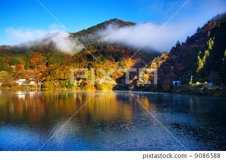 奧多摩湖沾滿黃色的秋天的顏色 9086588