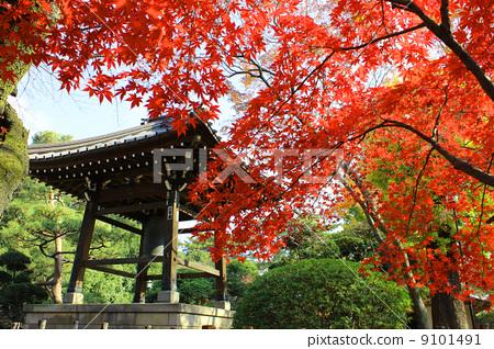 Autumn leaves of Gotokuji 9101491