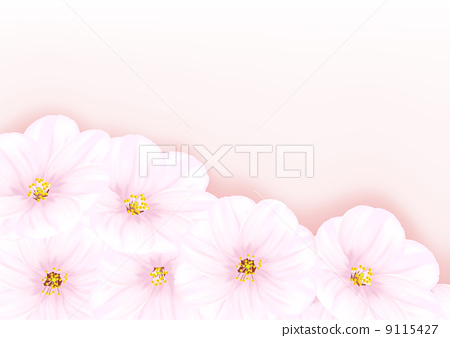 blossom cherry tree 9115427