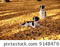 dog, dogs, pet 9148476