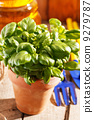 pot, tool, green 9279787