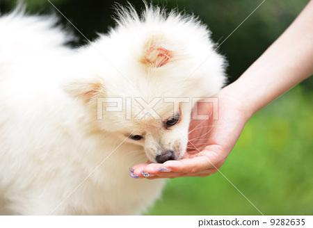 feed the dog 9282635