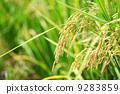agriculturist, agriculture, agriculturalist 9283859