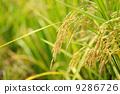 agriculturist, agriculture, agriculturalist 9286726