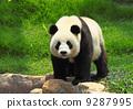 animal, adorable, asian 9287995