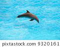 dolphin, creature, jump 9320161
