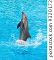 dolphin, creature, jump 9320172
