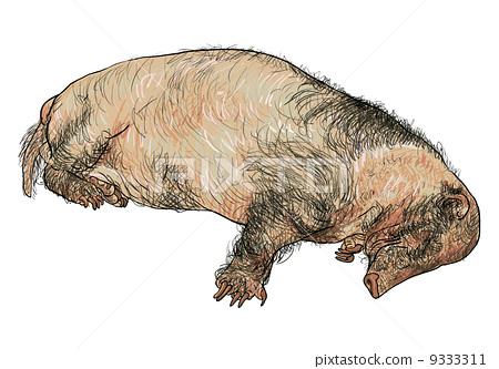 Hog badger 9333311