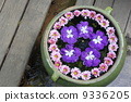purple flower in water pot 9336205