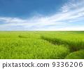 agriculturalist, asia, america 9336206
