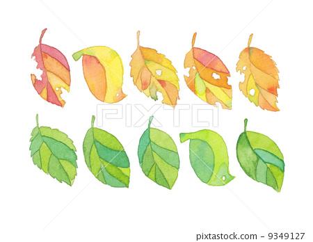 Leaf set 9349127