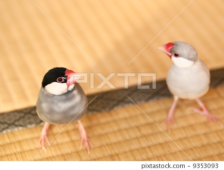 A couple of sentencebirds 9353093
